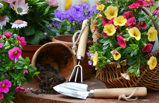 Curso online de jardinagem e paisagismo.